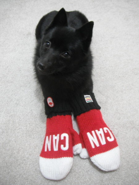 And ridiculous photos like my dog wearing Canada mittens.