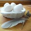 Eggscargot